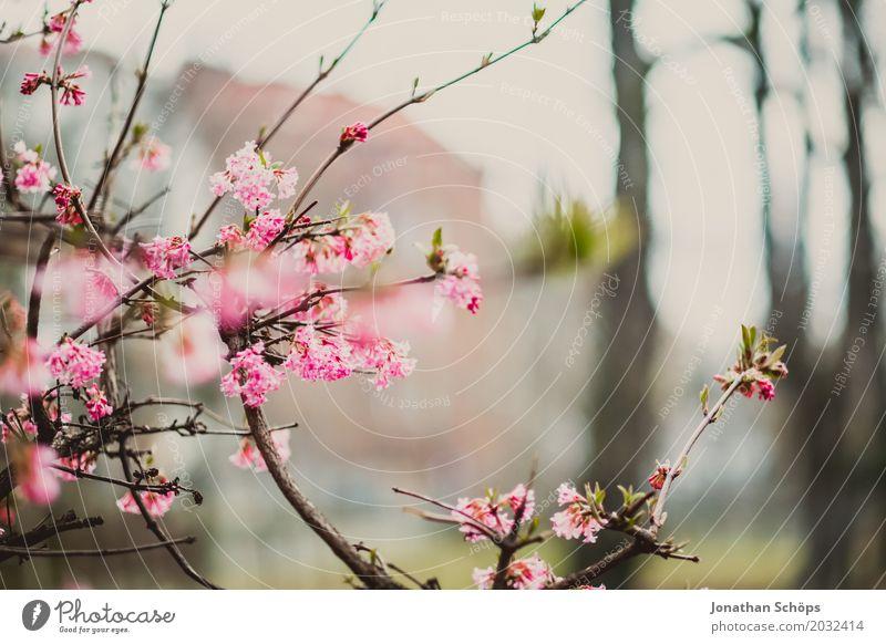 rosa Sommer Garten Frühling Blume Blüte Park Wiese Wachstum klein Erfurt Grünfläche Klein Venedig Klein-Venedig Erfurt Thüringen bühend mehrfarbig Außenaufnahme