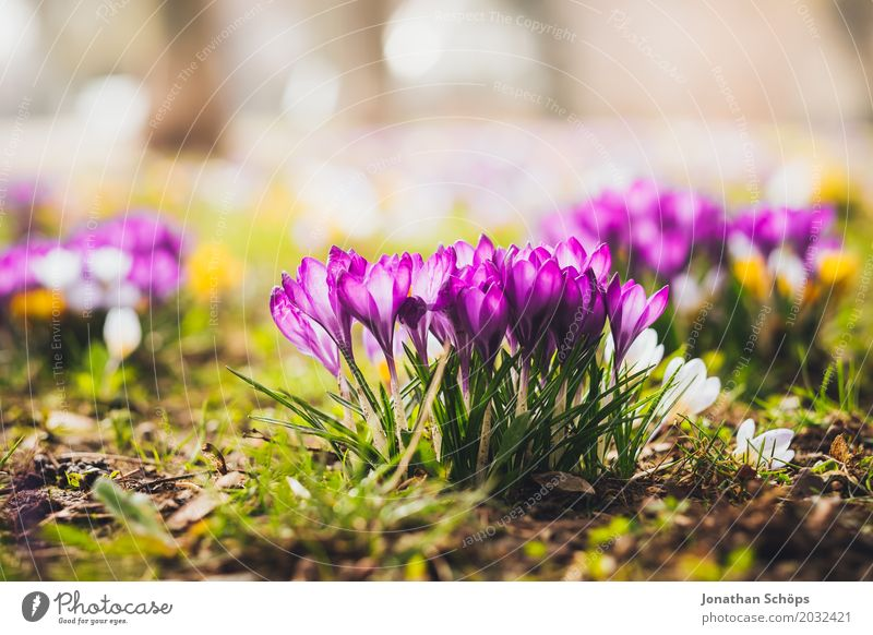 Frühlingswiese IX Sommer Blume Erholung gelb Blüte Wiese klein Garten rosa Wachstum ästhetisch Idylle Blühend Lebensfreude Romantik