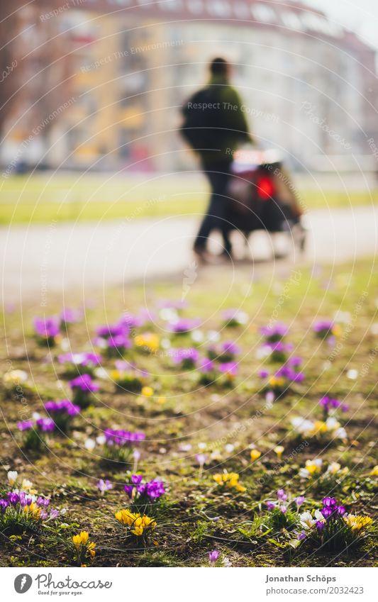 Osterspaziergang II Erholung Sommer Garten Mensch 1 Frühling Blume Blüte Park Wiese Wege & Pfade Wachstum klein gelb violett rosa Erfurt Grünfläche