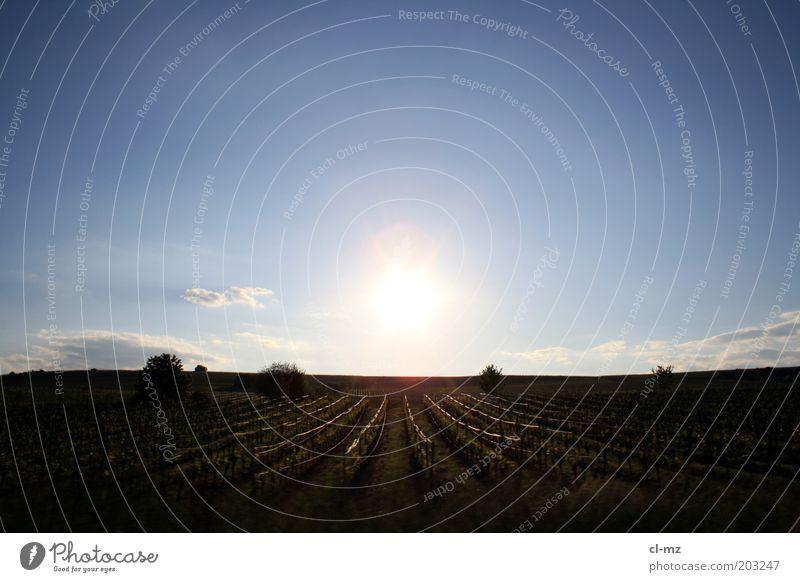 Weinberg Himmel Natur Pflanze Sonne Sommer Wolken ruhig Freiheit Landschaft Wärme Wetter Deutschland Feld frei Europa Wein