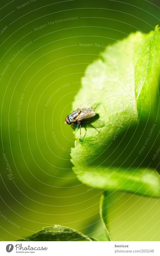 I believe I can FLY Natur grün Pflanze Blatt Fliege sitzen Flügel Insekt Umwelt