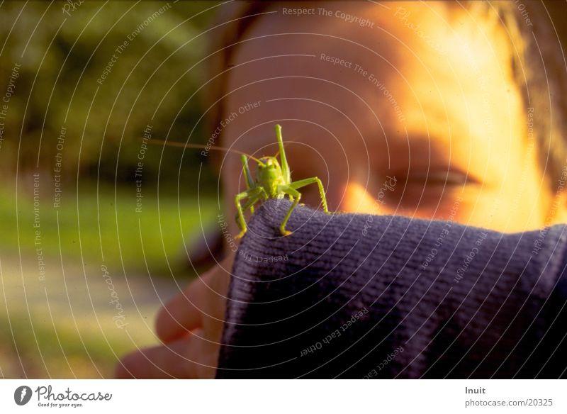 Junger Hüpfer Grünes Heupferd Kind Heuschrecke Blick Auge Umweltpädagogik