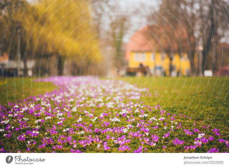 Frühlingswiese XI Sommer Blume Erholung Haus gelb Blüte Wiese klein Garten rosa Park Wachstum Idylle Blühend violett