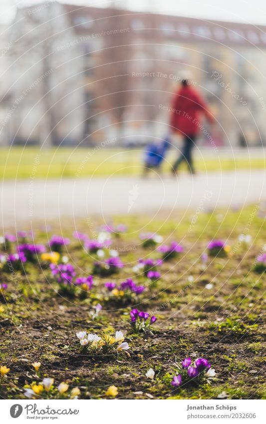 Osterspaziergang I Mensch Sommer Blume Erholung gelb Blüte Frühling Wiese Wege & Pfade feminin rosa Park Wachstum laufen Blühend Fußweg