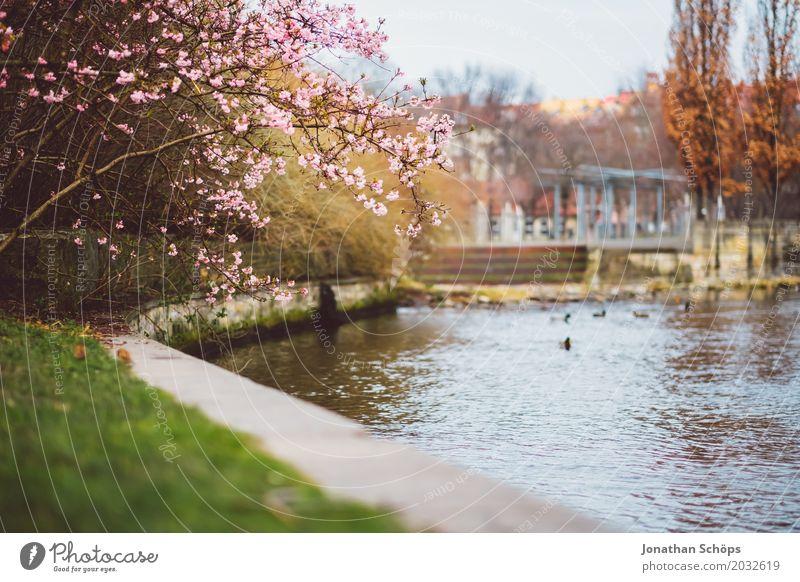 Klein-Venedig Erfurt Erholung Sommer Garten Wasser Frühling Blume Blüte Park Wiese Fluss Brücke Wachstum klein rosa Ente Grünfläche Klein Venedig Thüringen
