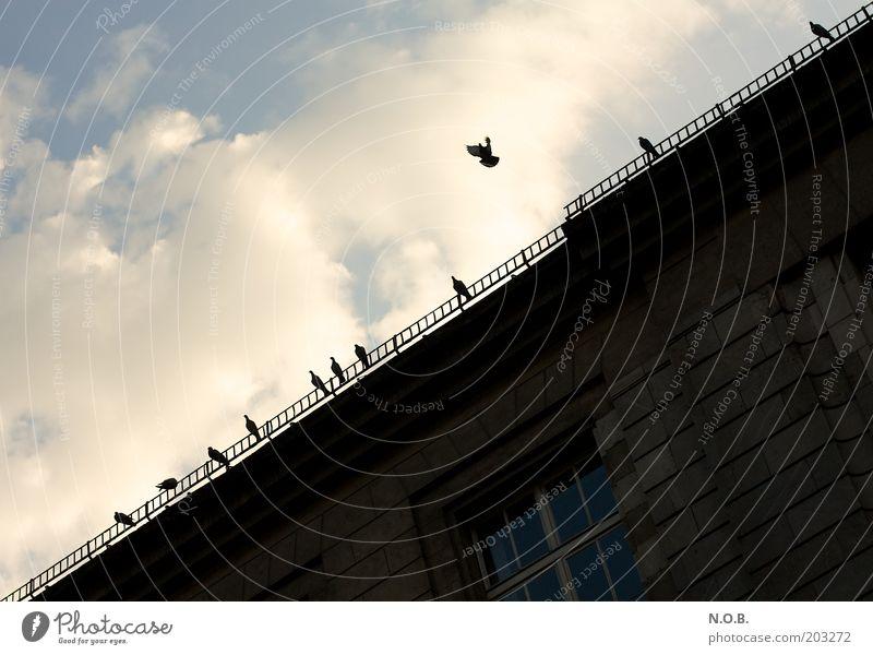 Friedensflieger Himmel Wolken Bauwerk Fassade Dachrinne Tier Taube Tiergruppe Friedenstaube fliegen friedlich Farbfoto Außenaufnahme Menschenleer