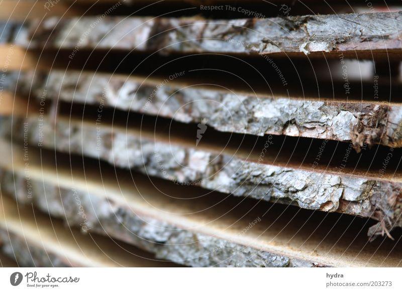 Schichtarbeit 2 Natur Baum ruhig Umwelt Holz grau liegen braun ästhetisch Handwerk Holzbrett nachhaltig Lager Symmetrie Stapel Genauigkeit