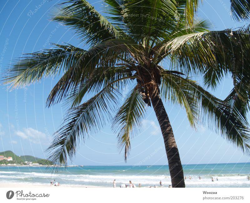 Sanya PalmBeach Mensch Wasser schön Meer blau Sommer Strand Ferien & Urlaub & Reisen Erholung Menschengruppe träumen Wärme Zufriedenheit Insel Tourismus liegen