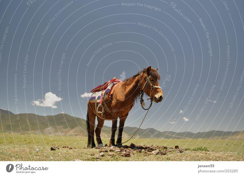 Loneliness Reiten Reitsport Umwelt Landschaft Himmel Wolkenloser Himmel Berge u. Gebirge Tier Pferd 1 stehen warten Gelassenheit geduldig ruhig Natur Farbfoto