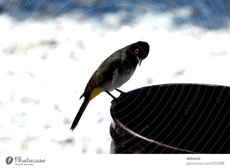 Neugierde trifft auf Schwarzes Loch Natur Tier Vogel frei beobachten entdecken Wildtier frech Nervosität Fass