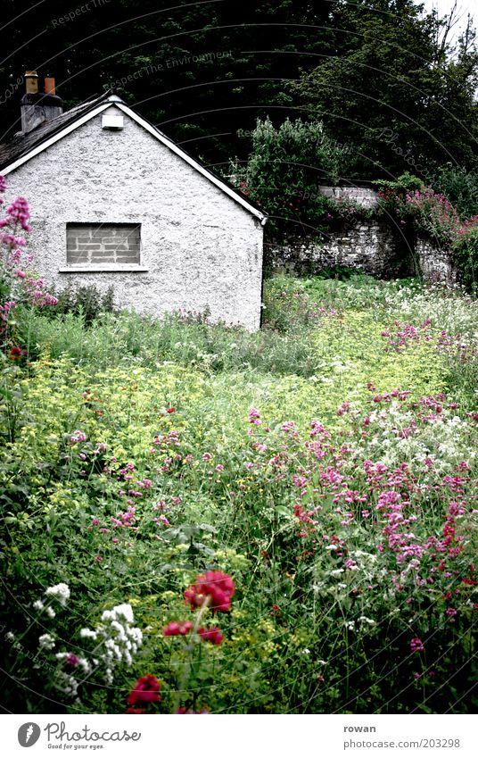 haus im grünen alt Blume Pflanze Haus dunkel Wiese Garten Gebäude trist Häusliches Leben wild natürlich Beet Einfamilienhaus Unbewohnt