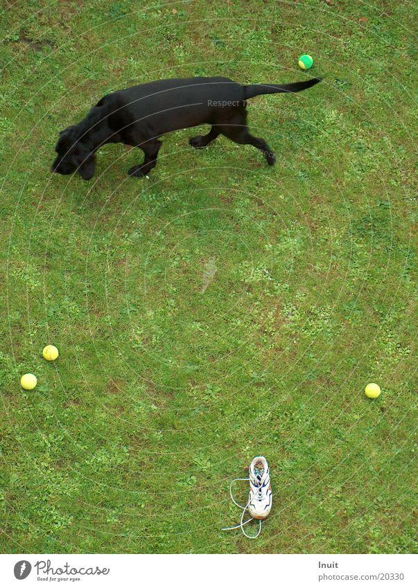 Qual der Wahl Spielen Gras Hund Schuhe Beschluss u. Urteil