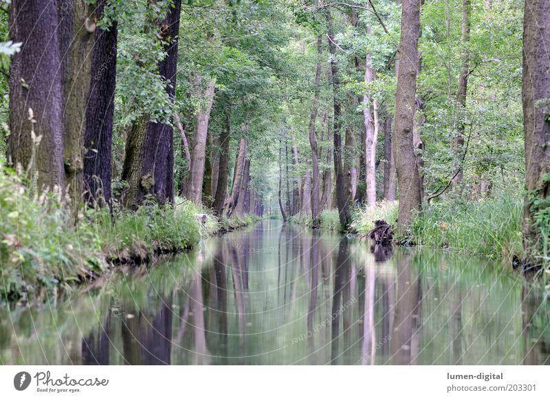 Spreewald Natur Baum ruhig Wald Umwelt Fluss Idylle Flussufer Spiegelbild Reflexion & Spiegelung Naturschutzgebiet Brandenburg Traumwelt Spreewald Lübbenau