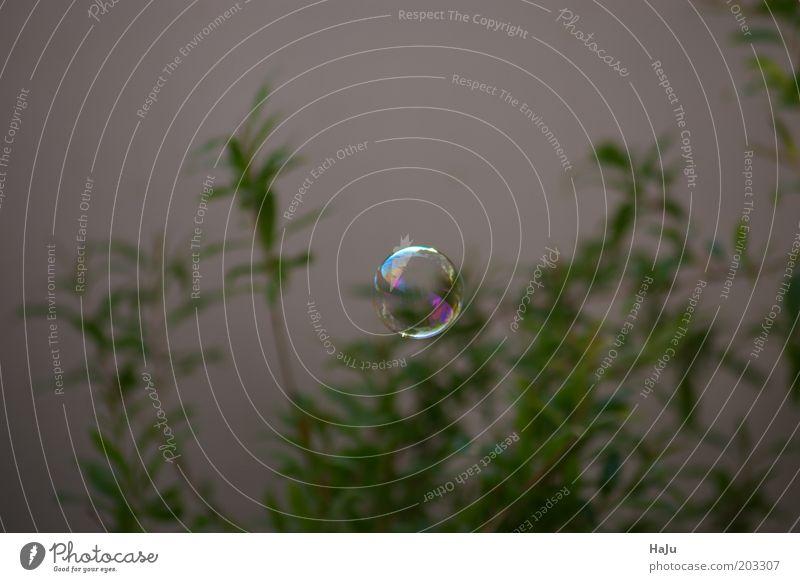 Seifenblase im Grünen schön grün Sommer ruhig Bewegung Luft glänzend elegant fliegen rund fallen beobachten Vergänglichkeit einzigartig geheimnisvoll Kugel