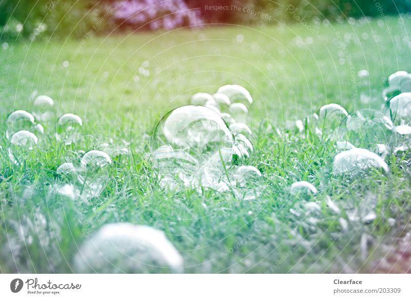Seifenblasen auf dem Rasen grün Garten glänzend ästhetisch Vergänglichkeit zerbrechlich Kindheitserinnerung Inspiration mehrfarbig zartes Grün
