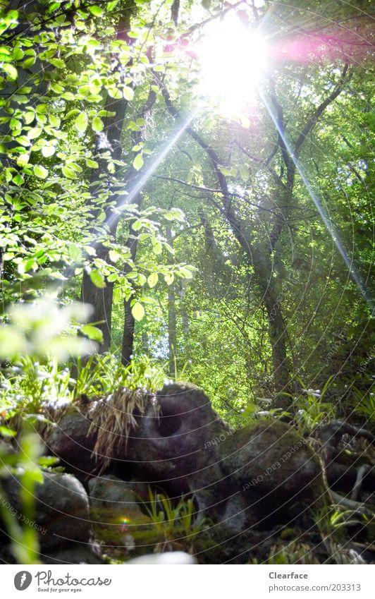 Hobbithausen Natur Baum Pflanze Sommer Wald Umwelt träumen fantastisch geheimnisvoll entdecken Loch Baumstamm Schönes Wetter Moos Versteck Waldboden