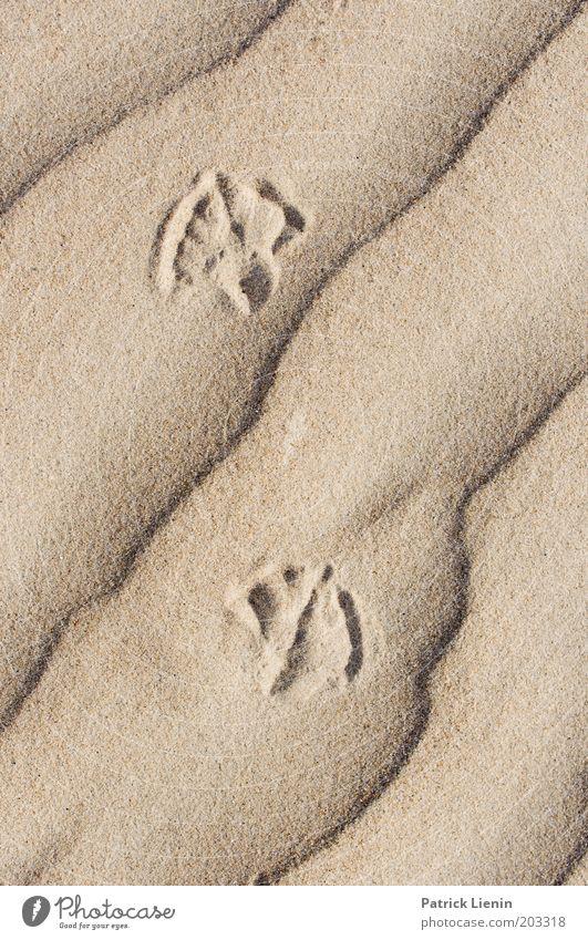 lines in sand Natur Meer Sand Linie hell Küste elegant Spuren sanft Strand gekrümmt Sandstrand spurenlesen