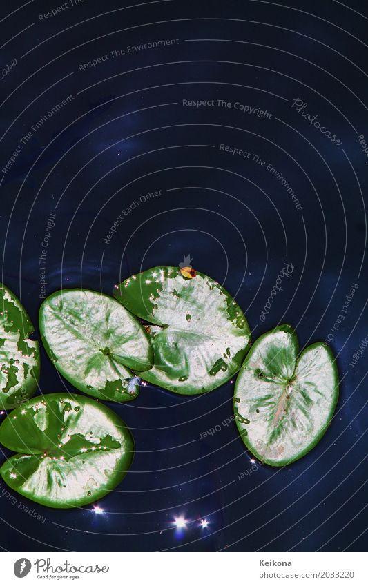 Glossy water lily leaves Ausflug Freiheit Camping Sommer Sommerurlaub wandern Natur Pflanze Stern Sonne Sonnenlicht Schönes Wetter Wasserpflanze Seerosenblatt