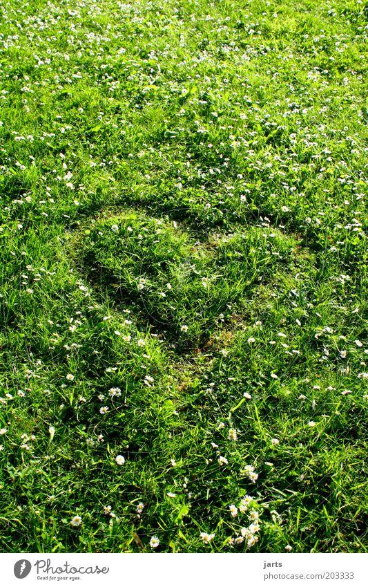 green love Natur Frühling Sommer Schönes Wetter Gras Wiese Zeichen Herz natürlich grün Verliebtheit Umweltschutz Klimaschutz mehrfarbig Außenaufnahme