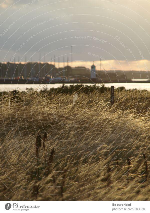 Abendsonne über Arö Dänemark Natur Landschaft Pflanze Wasser Himmel Wolken Sonnenlicht Sommer Wetter Wind Regen Gras Wiese Küste Seeufer Ostsee Insel