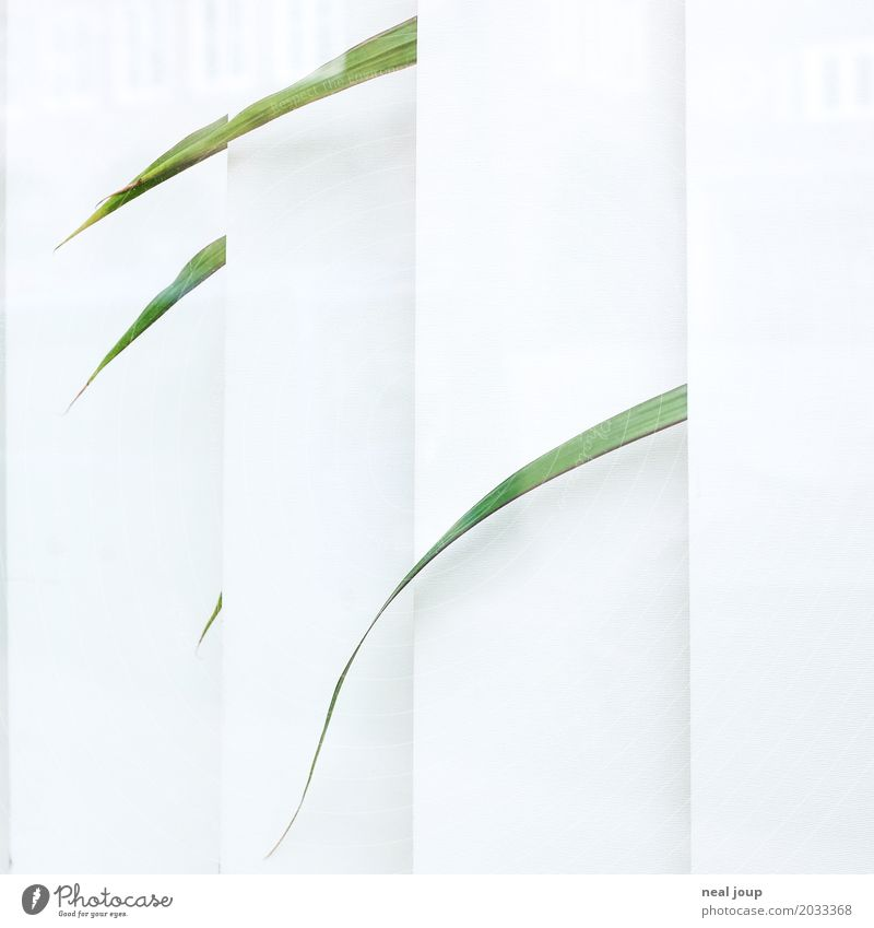 Einzelne Blätter einer vereinsamten Büropflanze schauen durch die Jalousie Grünpflanze Topfpflanze Zimmerpflanze Fenster Traurigkeit verblüht warten trist grün