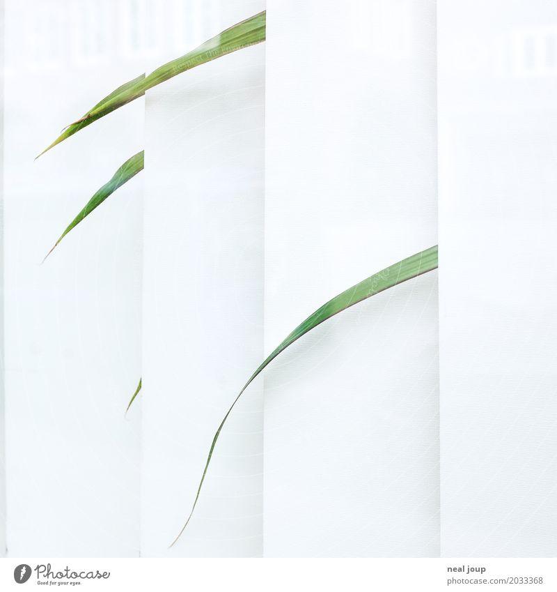 Office life -III- Büro Grünpflanze Topfpflanze Zimmerpflanze Fenster Jalousie Traurigkeit verblüht warten trist grün weiß Langeweile Fernweh Einsamkeit