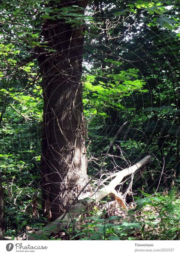 Ein Sonnenstrahl! ruhig Umwelt Natur Pflanze Frühling Schönes Wetter Baum Wald grün standhaft Farbfoto Außenaufnahme Menschenleer Tag Schatten Sonnenlicht
