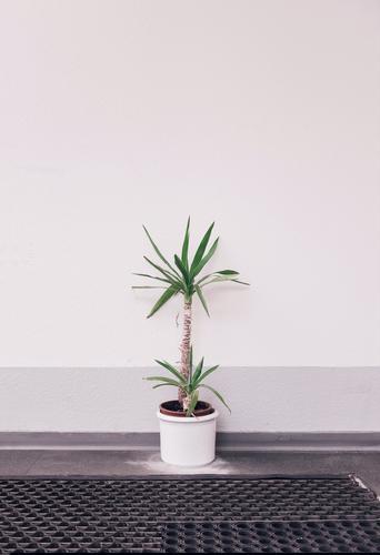Office life -I- Pflanze Stadt Einsamkeit Traurigkeit Büro trist warten trashig Ruhestand stagnierend Enttäuschung Foyer Büroarbeit Arbeitslosigkeit sparsam