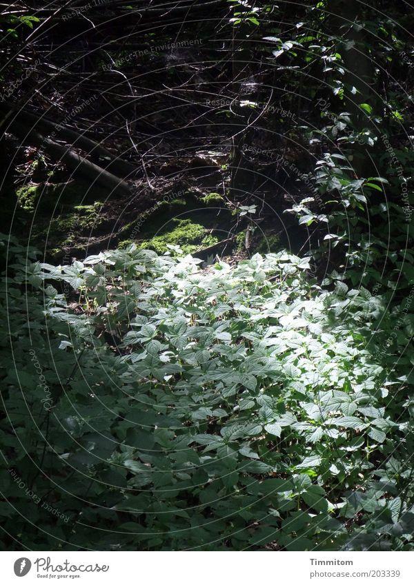 Blättersee Natur Pflanze ruhig Blatt Wald Umwelt ästhetisch Wachstum Schönes Wetter