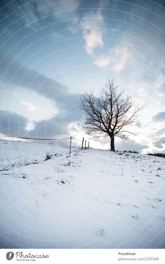 heiss draussen Umwelt Natur Pflanze Himmel Wolken Winter Klima Schönes Wetter Eis Frost Schnee Baum kalt Traurigkeit Einsamkeit Hügel Zaun trist Trauer