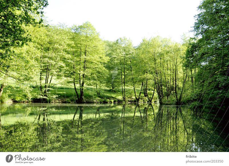Am See Garten Umwelt Natur Landschaft Luft Wasser Himmel Sonnenlicht Sommer Wetter Schönes Wetter Pflanze Baum Sträucher Grünpflanze Park Wald Gefühle Stimmung