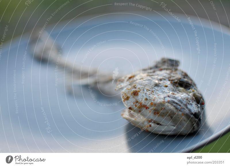 """""""Mein Fisch stinkt nicht!"""" blau Tier Tod Kopf liegen Wildtier Lebensmittel Ernährung trist Vergänglichkeit Verfall Geschirr Teller Abendessen"""