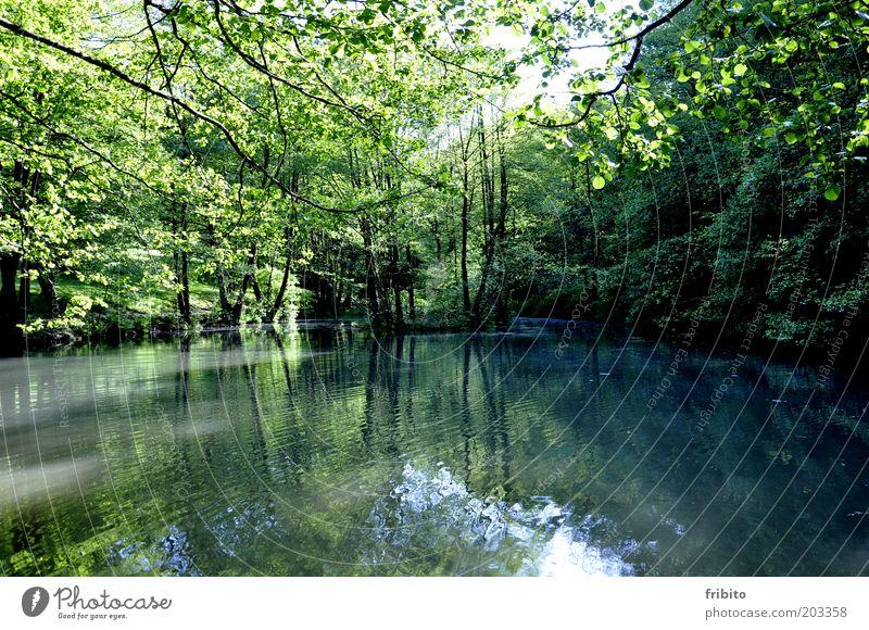 Spiegelung im See Umwelt Natur Landschaft Pflanze Luft Wasser Sonnenlicht Sommer Klima Wetter Schönes Wetter Baum Sträucher Grünpflanze Wald Seeufer Insel Teich