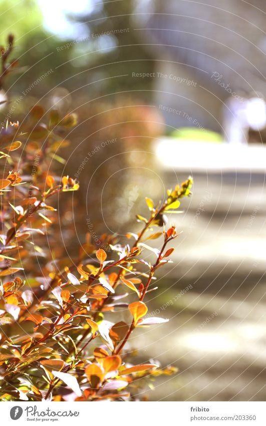 Die Hecke Umwelt Natur Pflanze Sonnenlicht Wärme Sträucher Blatt Grünpflanze Garten Park Menschenleer Farbfoto Außenaufnahme Tag Licht Schatten Kontrast