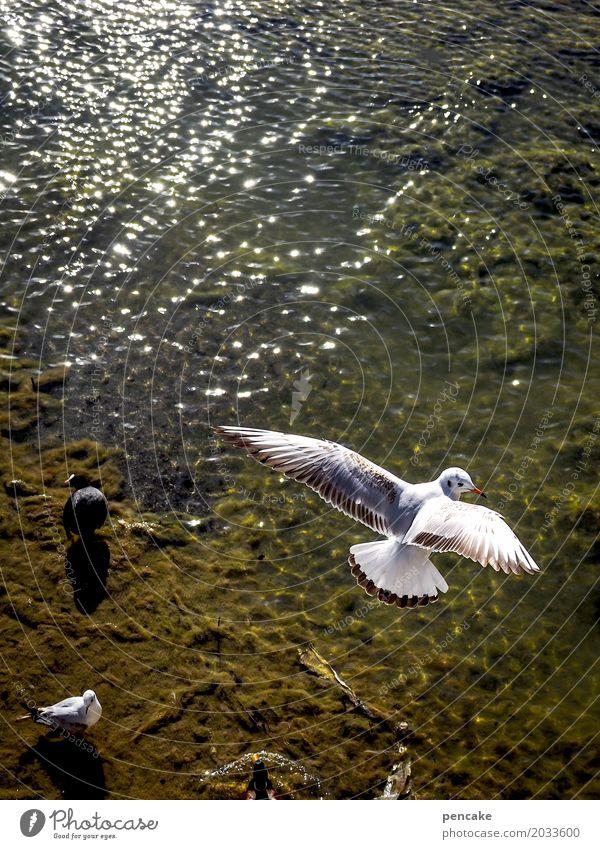 luftikus Urelemente Wasser Schönes Wetter Seeufer Bucht Tier Wildtier Vogel fliegen Möwe Luftaufnahme Flügel Wellen Bodensee Farbfoto Außenaufnahme