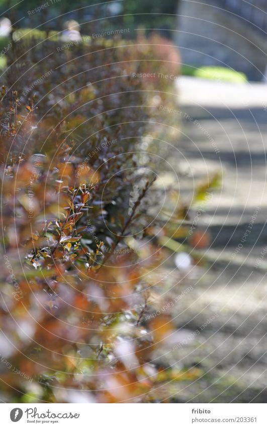 Der Weg Umwelt Natur Pflanze Sonnenlicht Sommer Sträucher Blatt Grünpflanze Garten Park grau grün rot Farbfoto Gedeckte Farben Außenaufnahme Menschenleer Tag