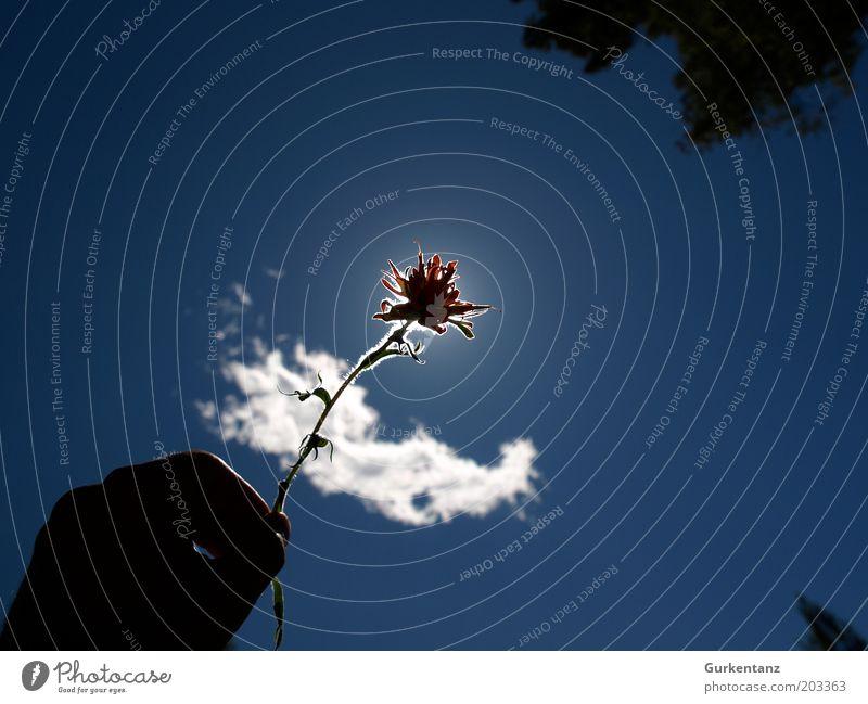 Indian Paintbrush Natur Hand schön Himmel weiß Sonne Blume blau Pflanze rot Wolken Blüte Finger ästhetisch Romantik Blühend