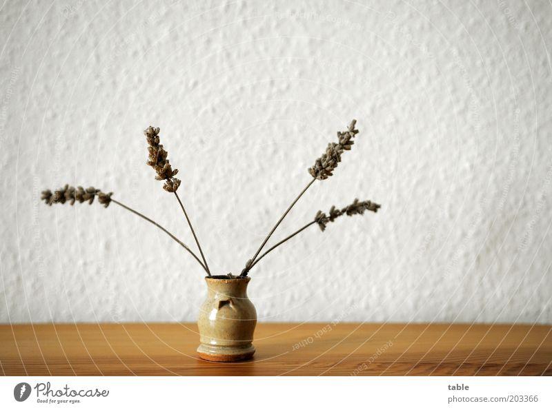 Viererbande weiß Pflanze grau klein braun Ordnung stehen Dekoration & Verzierung Kitsch trocken Tapete Duft Vase Lavendel Maserung Kräuter & Gewürze