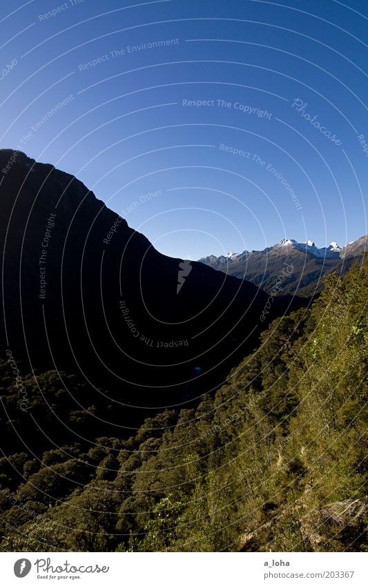 lord of the sandflies Landschaft Urelemente Wolkenloser Himmel Schönes Wetter Baum Farn Berge u. Gebirge Schneebedeckte Gipfel Schlucht hoch schön Sehnsucht