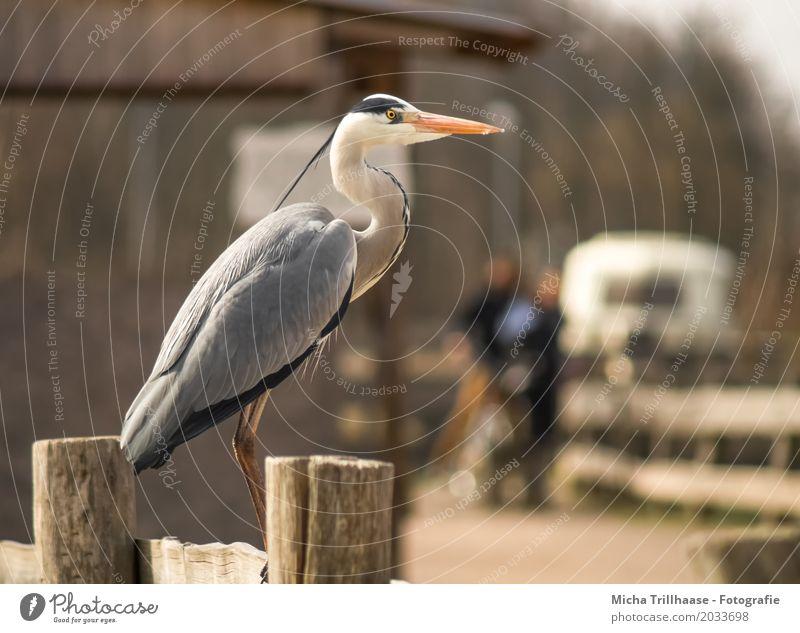 Reiher auf dem Zaun Mensch Frau Natur Mann weiß Sonne Tier Haus Erwachsene natürlich Holz grau Vogel orange Wildtier stehen
