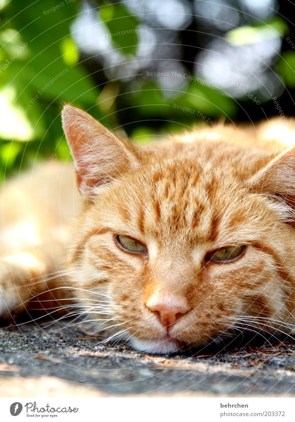 wat willst du denn schon wieder? Tier Haustier Katze Tiergesicht Fell 1 Tierliebe Hauskatze Auge Ohr Nase Schnurrhaar lieblingstier kuschlig faulenzen