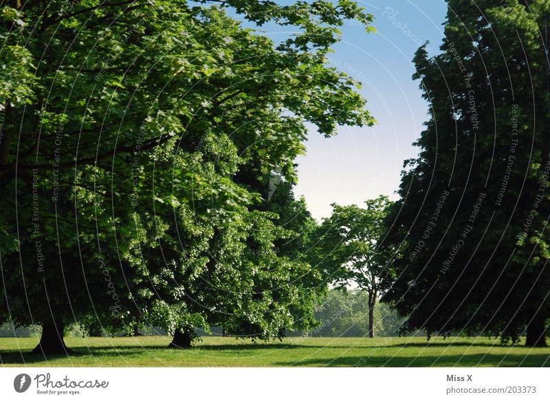 Hyde Park, Serpentine Rd, 9:30 am Natur Baum Sommer Ferien & Urlaub & Reisen ruhig Erholung Wiese Umwelt Ausflug Idylle London Schönes Wetter England Morgen