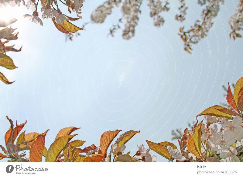 Frühlingsgrüße 4 blau Pflanze Blatt Ferne Frühling Blüte natürlich Luft Schönes Wetter Wolkenloser Himmel Duft positiv Blütenblatt Rahmen Blauer Himmel Valentinstag