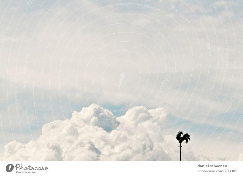 Südsüdwest mit Gewitterböen Himmel weiß Wolken Wind Wetter Klima Klimawandel Gewitterwolken Wetterhahn Windrichtung