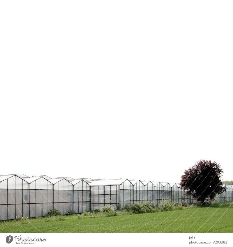 Großgärtnerei Unternehmen Himmel Baum Wiese Feld Bauwerk Gebäude Gewächshaus groß Gärtnerei Landwirtschaft Farbfoto Außenaufnahme Textfreiraum oben