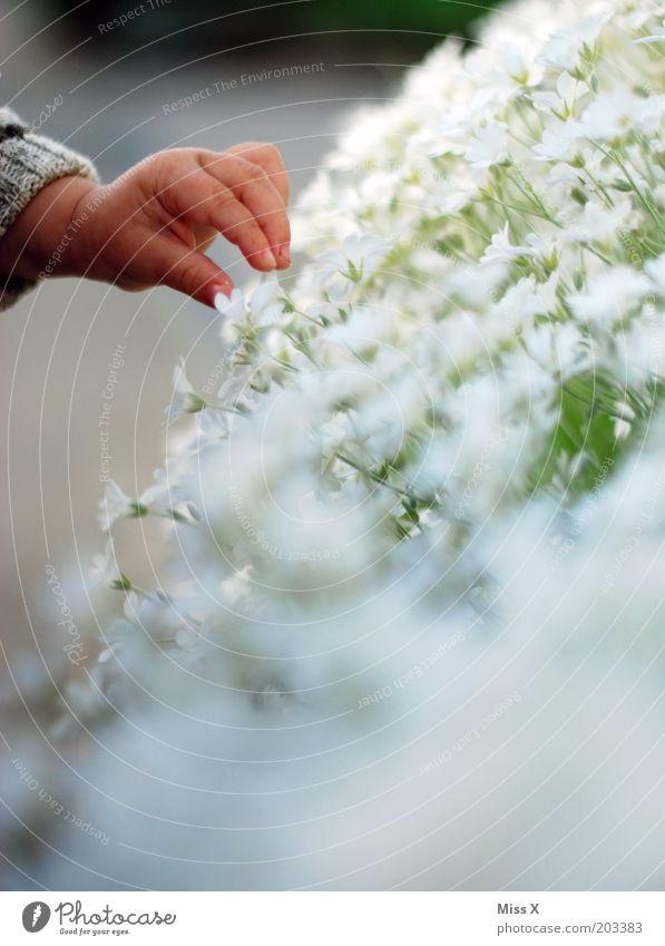 Ich pflück der Mami eine Blume Mensch Kind Hand Blume Pflanze Blüte klein Romantik Blühend pflücken Kinderhand