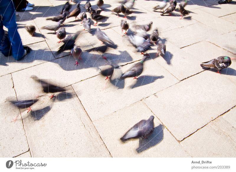 Tauben Freizeit & Hobby Ausflug Wetter Tier Vogel Tiergruppe Stimmung Urlaubsort Venedig Farbfoto Außenaufnahme Tag Licht Schatten Langzeitbelichtung