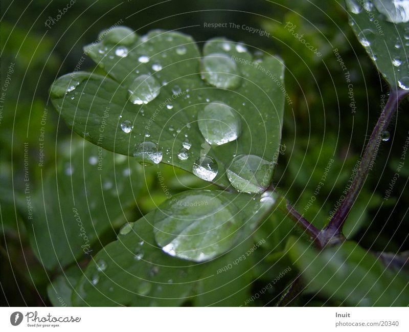 Tropfen 1 Blatt Pflanze Wassertropfen Regen