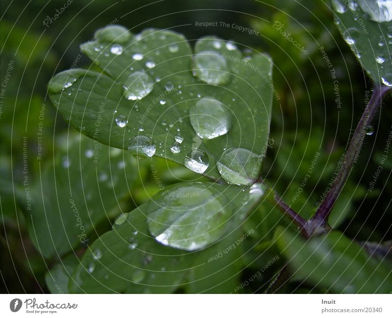 Tropfen 1 Pflanze Blatt Regen Wassertropfen