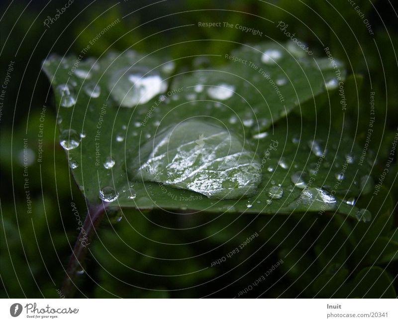 Tropfen 2 Blatt Pflanze Wassertropfen Regen
